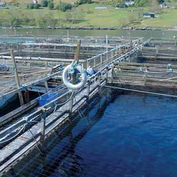 Scottish Aquaculture Roadmap to 2030 Launched