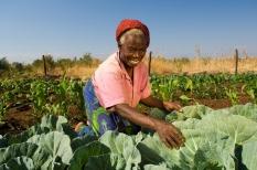 BIF_CS_SunHotels_Zambia_mapenzi5